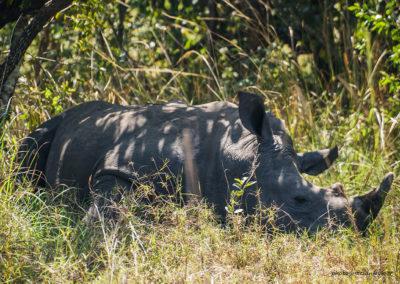 Ziwa Rhino Sanctuary, Uganda, Foto-Nr. 293