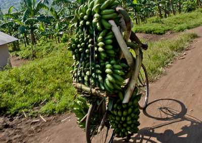 Bananentransport in der Nähe von Mubuku, Uganda, Foto-Nr. 415