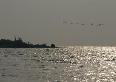 Kazingakanal, Uganda, Foto-Nr. 427