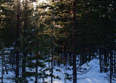 Finnischer Wald, Menesjärvi FI, Foto-Nr. 203