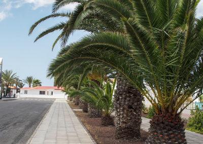 La Oliva, Fuerteventura (E), Foto-Nr. 433