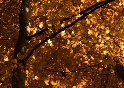 Buche im Herbst, Foto-Nr. 210