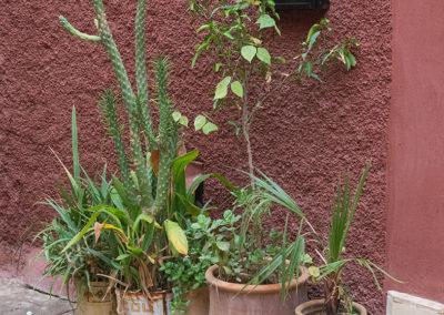 Pflanzentöpfe in Marrakesch (MAR), Foto-Nr. 242