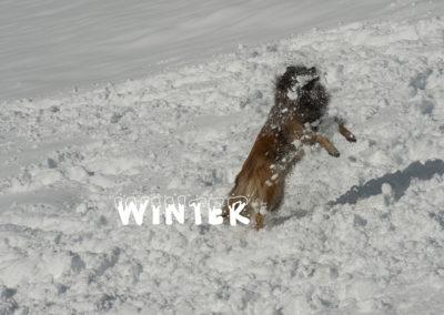 Ever Osiri von Sirius, Tervueren im Schnee, Foto-Nr.  524