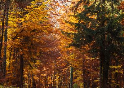 Herbstbäume, Foto-Nr. 103