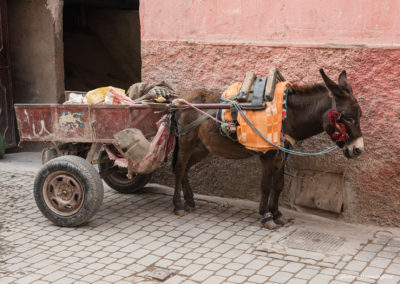 Transportesel, Marrakesch (MAR), Foto-Nr. 235