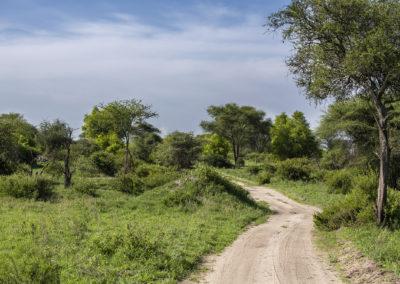Tarangire NP, Tanzania
