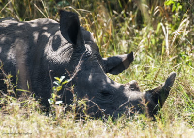 Ziwa Rhino Sanctuary, Uganda, Foto-Nr. 294