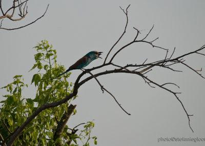 Vogel mit Beute, Murchison Fall National Park, Uganda, Foto-Nr. 403