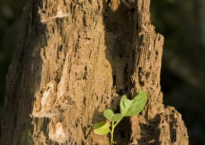 Kibale Forest, Uganda, Foto-Nr. 410