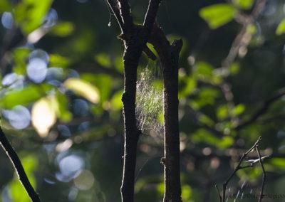 Spinnennetz im Kibale Forest, Uganda, Foto-Nr. 406