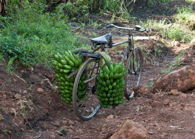 Bananentransport in der Nähe von Hima, Uganda, Foto-Nr. 414