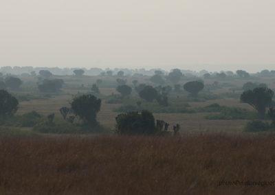 Queen Elisabeth Park, Uganda, Foto-Nr. 422