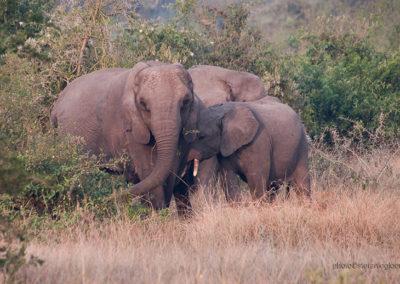 Elefanten im Queen Elisabeth Park, Uganda, Foto-Nr. 420