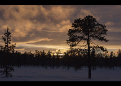 Finnischer Wald, Menesjärvi FI, Foto-Nr. 207