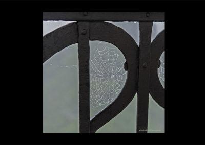 Spinnennetz, Foto-Nr. 221