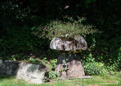 Storchenschnabel auf Holzpilz, Foto-Nr. 150