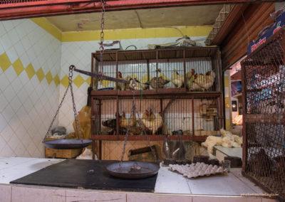 Hühner in der Markthalle, Marrakesch (MAR), Foto-Nr. 258