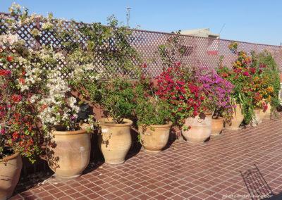 Terrasse Riad les Bougainvillier, Marrakesch (MAR), Foto-Nr. 331