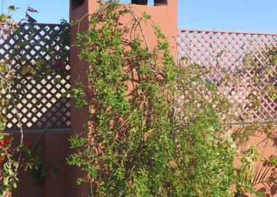 Terrasse Riad les Bougainvillier, Marrakesch (MAR), Foto-Nr. 332