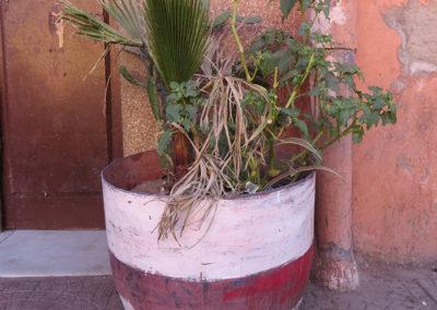 Pflanzentopf, Marrakesch (MAR), Foto-Nr. 334