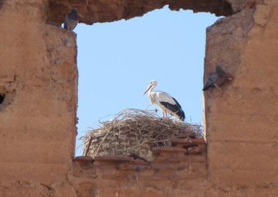 Storch, Marrakesch (MAR), Foto-Nr. 338