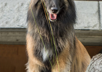 Ever Osiri von Sirius, Foto-Nr. 525