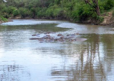 Hippo-Pool, Serengeti (TZ)
